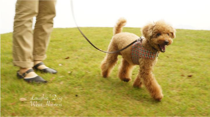 ラフィンドッグ 着脱が簡単で愛犬にかかる負担が軽いウエアハーネス